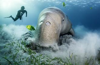 Подводная Одиссея на Марс - за черепахами, дельфинами и морскими коровами!           С 20 по 27 апреля 2019 г.